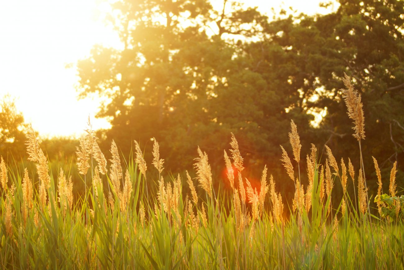 image of summer grass