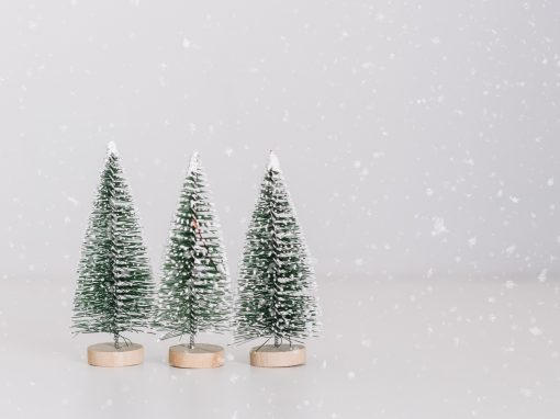 small holiday trees in snow