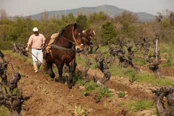 Small farmers in Cauquenes 3.jpg
