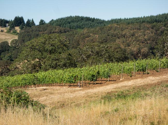bittan_vineyards-10.jpg