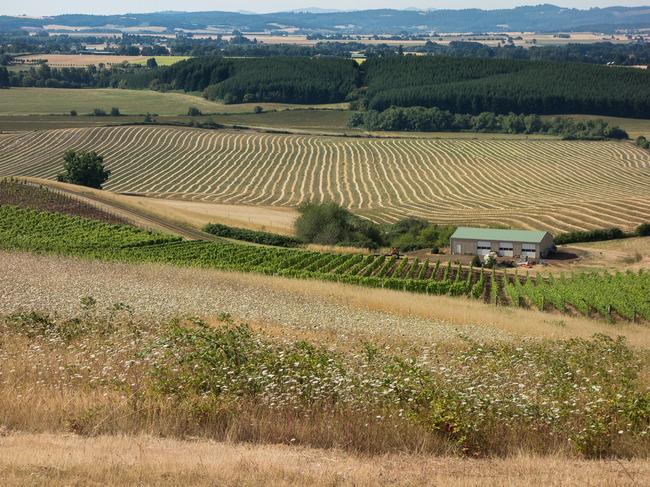 bittan_vineyards-2.jpg