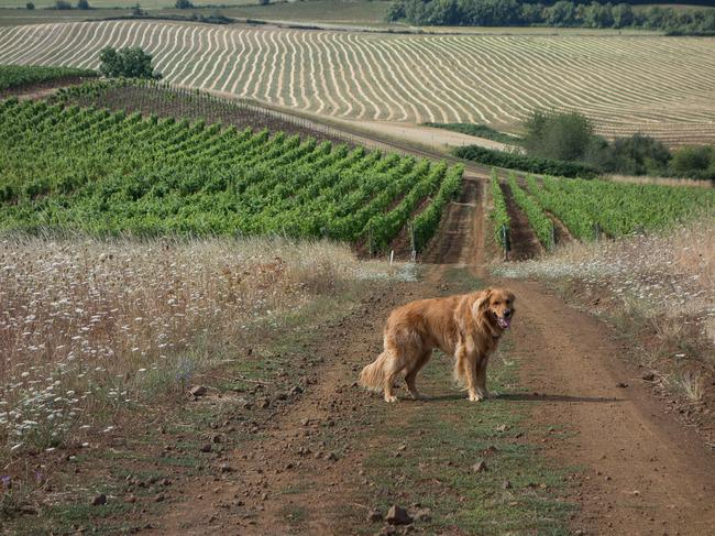 bittan_vineyards-4.jpg