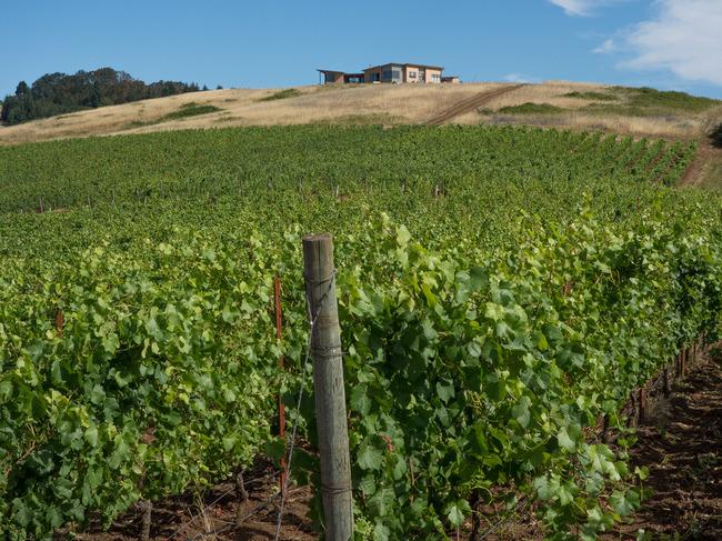 bittan_vineyards-5.jpg