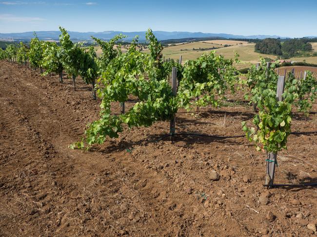 bittan_vineyards-6.jpg