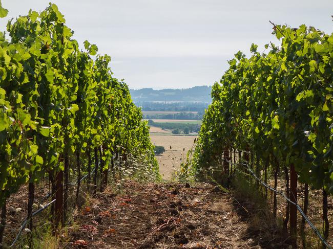 bittan_vineyards-7.jpg
