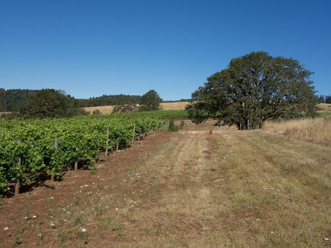 bittan_vineyards-8.jpg