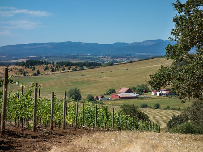 bittan_vineyards-9.jpg