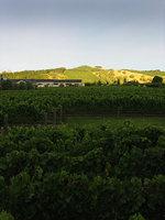 https://www.vinography.com/wp-content/uploads/2020/04/craggy_range_vineyards-thumb.jpg