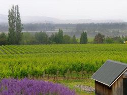 https://www.vinography.com/wp-content/uploads/2020/04/felton_road_vineyards-thumb.jpg
