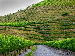 https://www.vinography.com/wp-content/uploads/2020/04/hawkesbay_vineyards_06-thumb.jpg