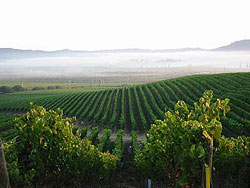 kingston.vineyards.sm.jpg