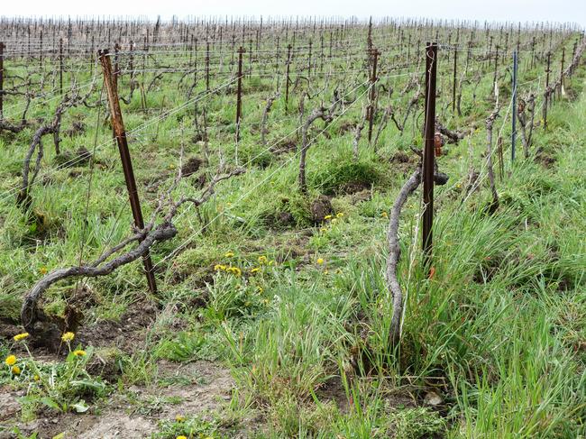 organic_vineyard_champagne.jpg
