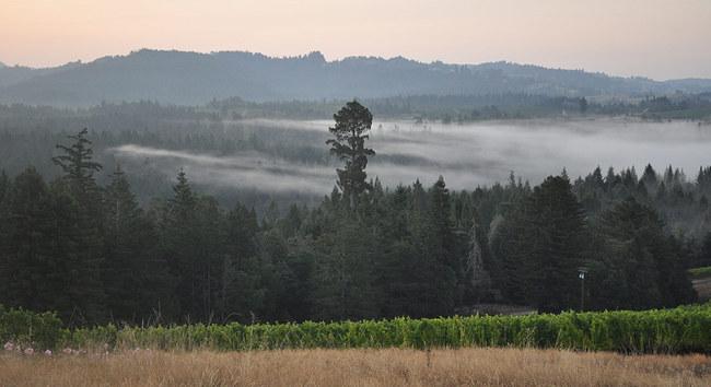 peay_vineyards+misty.jpg