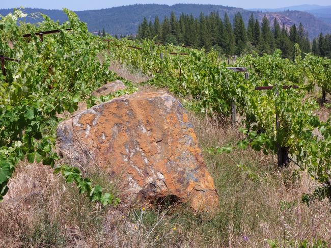 renaissance_vineyards-11.jpg