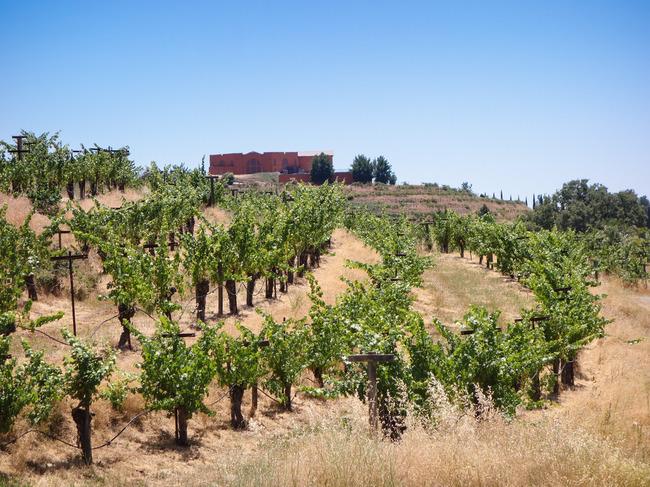 renaissance_vineyards-9.jpg