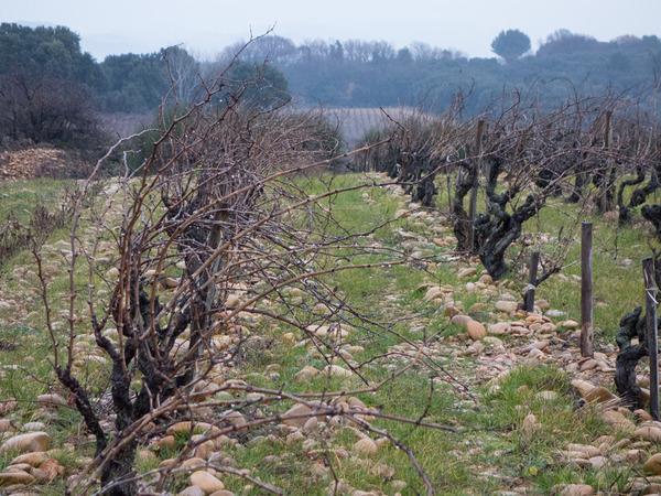 soil-3.jpg