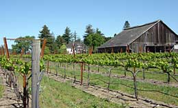 strata.vineyard.jpg