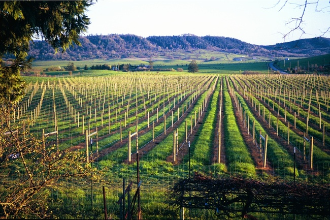 umqua_valley_vineyard.jpg