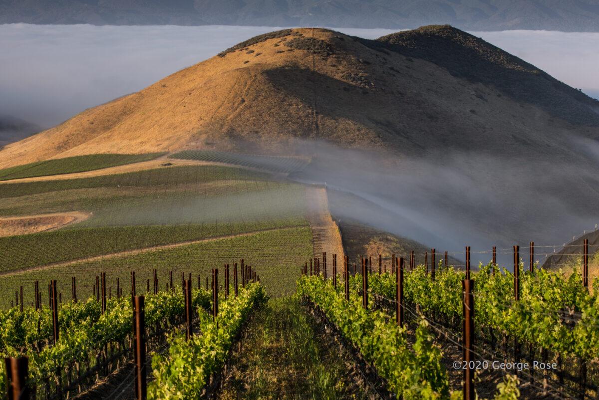 Landscape photo of Star Lane Vineyards