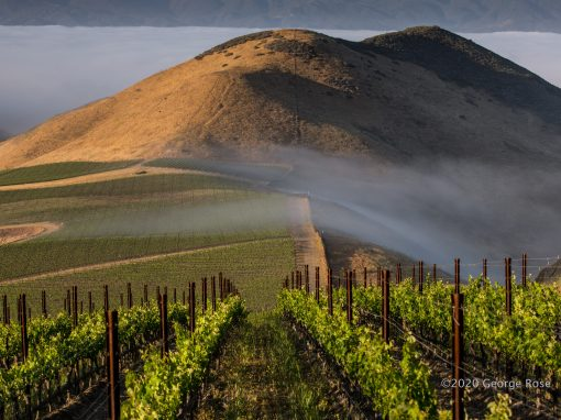 Landscape photo of Star Lane Vineyards