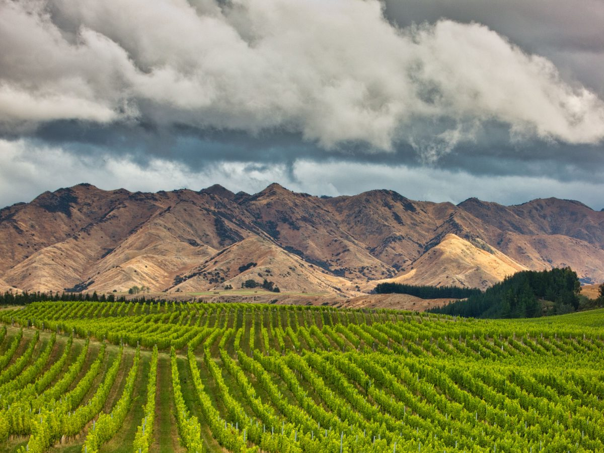 Churton Vineyards
