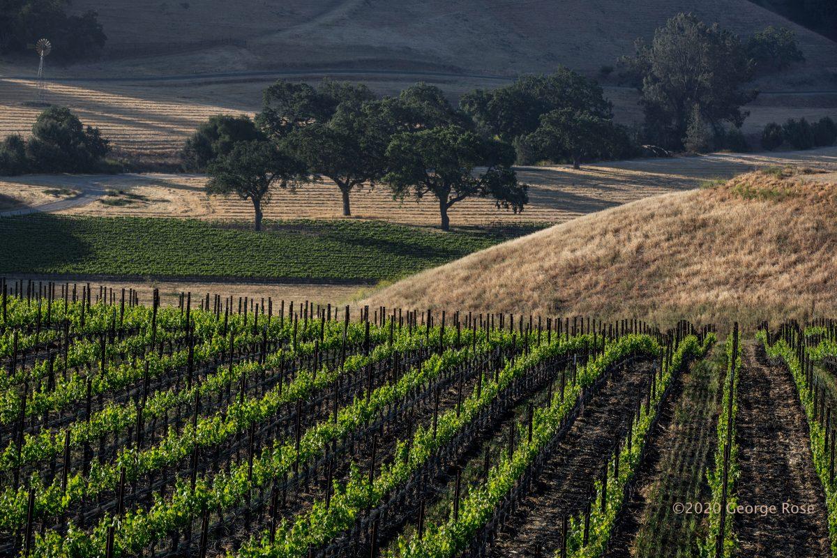 Dierberg Vineyard