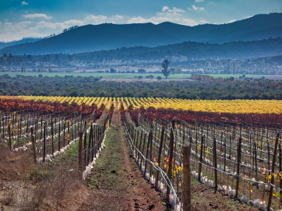 Landscape photo of vineyard