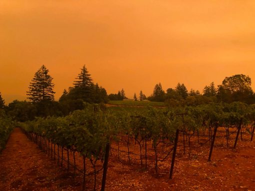 Orange skies above Lamborn Vineyards