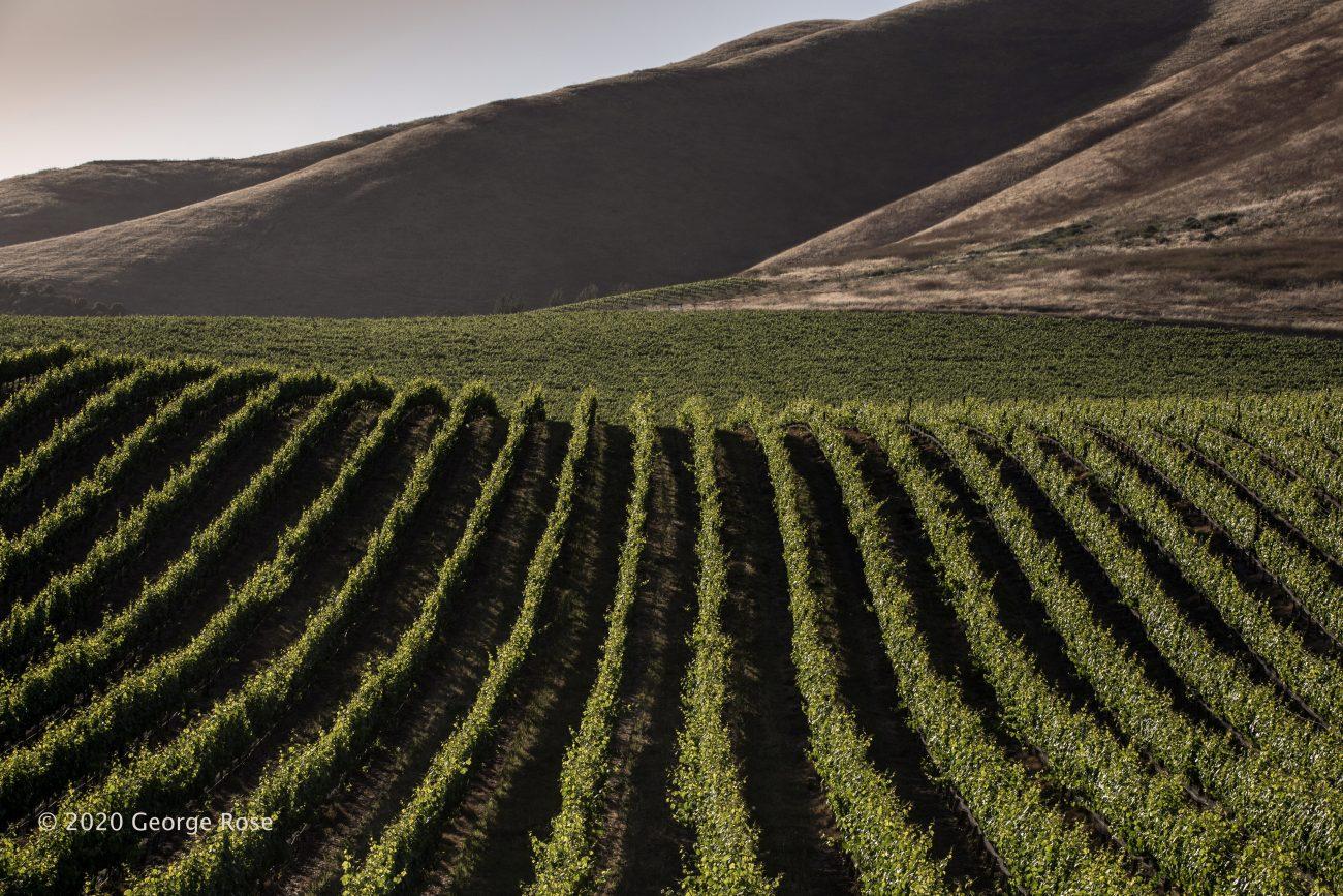 Vineyard Image