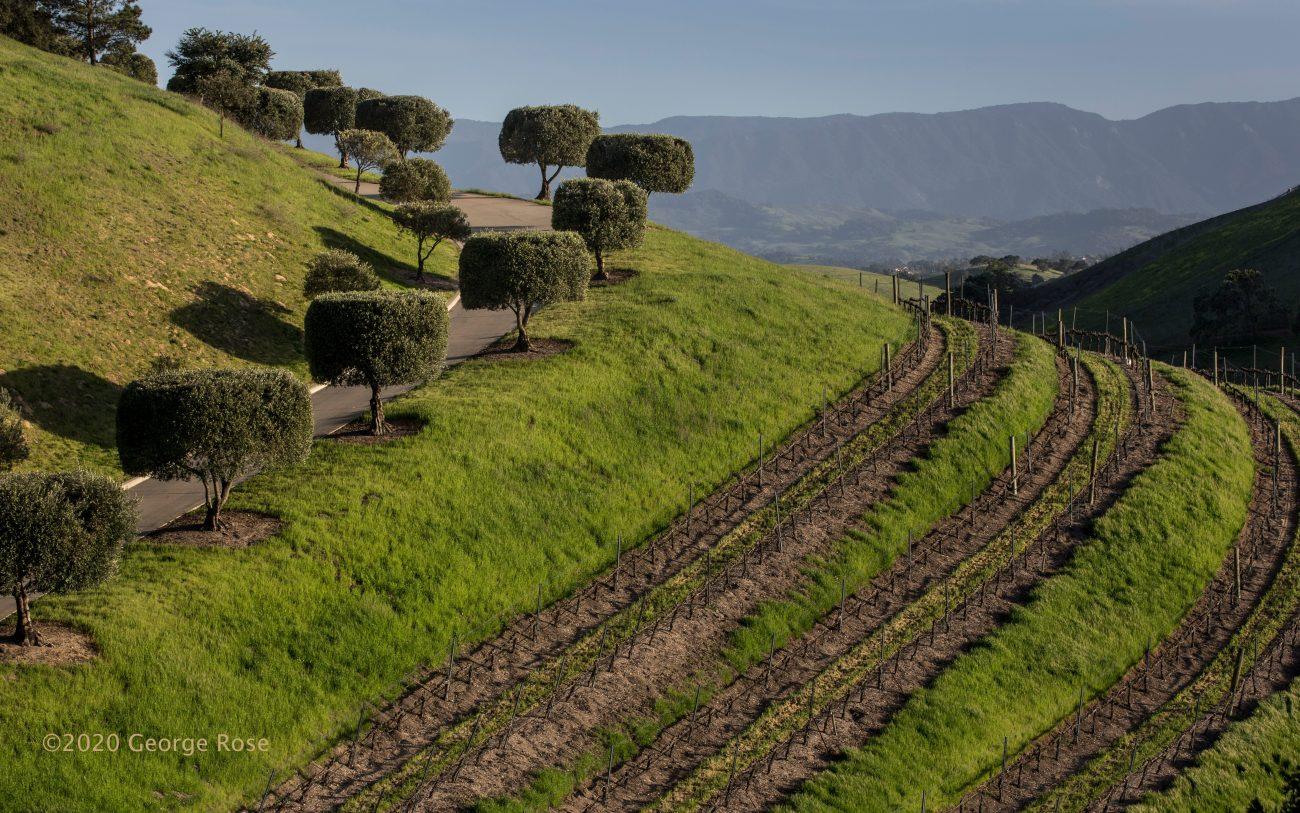 Vineyard Photograph