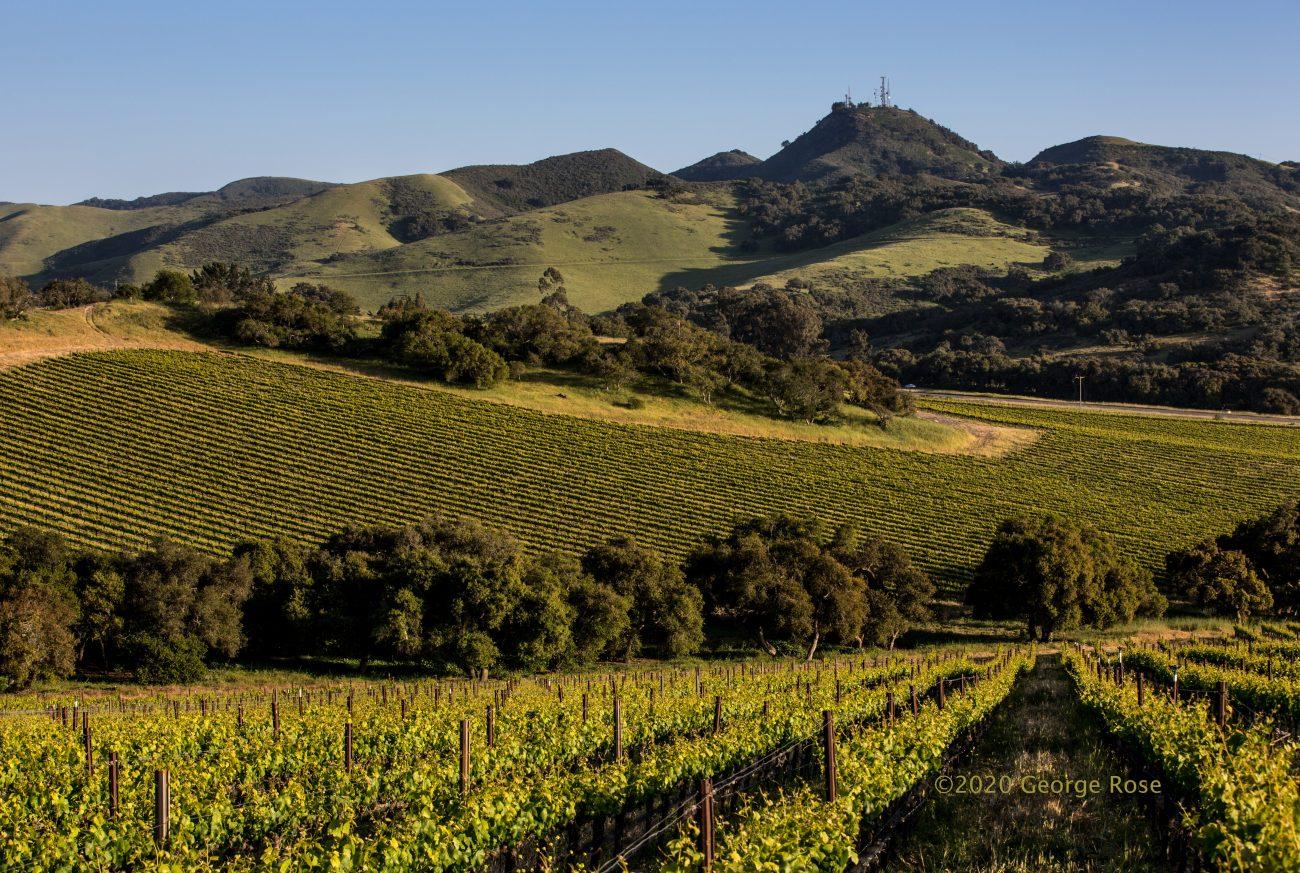 Solomon Hills Vineyard