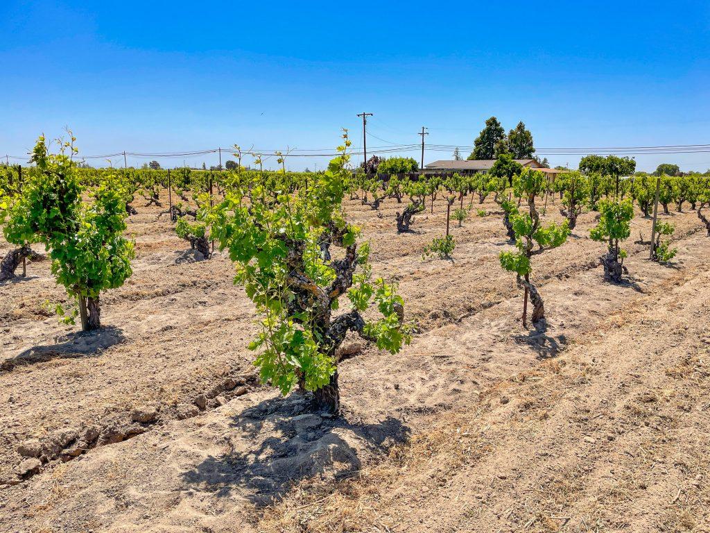 Kirschenmann Vineyard