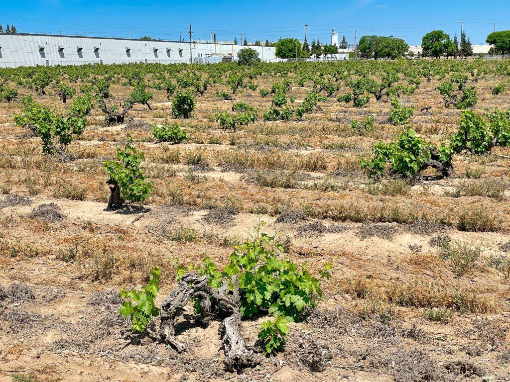 Noma Ranch Vineyard
