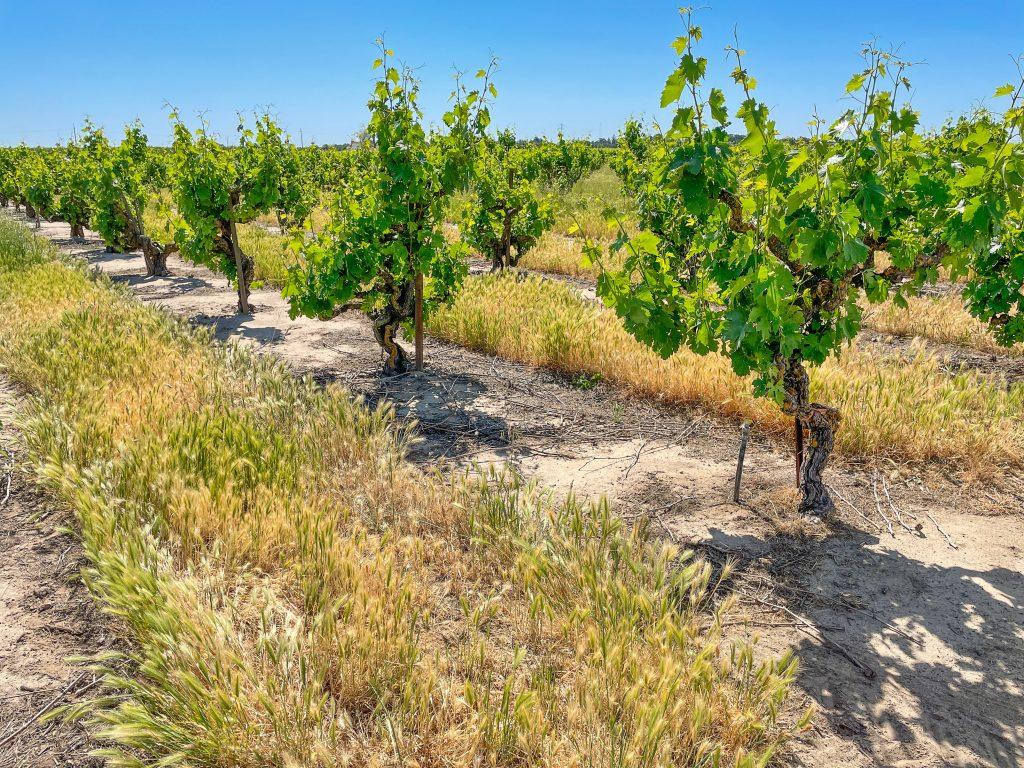 Marian's Vineyard
